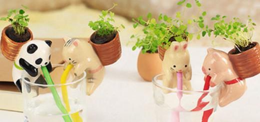 selbstbewässernde Mini-Blume