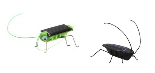 solar karkalake grasshuepfer cockroach